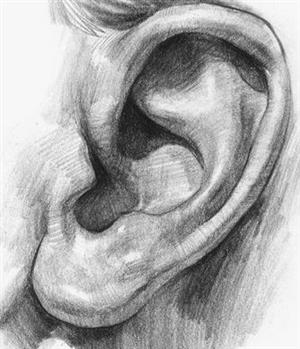 Ear done in Pencil