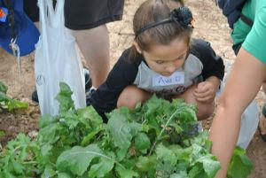 Kinder farmers checking the plants